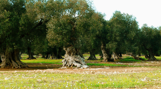 Questa è la Puglia